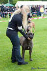20100513-Bullmastiff-Clubmatch_31042.jpg
