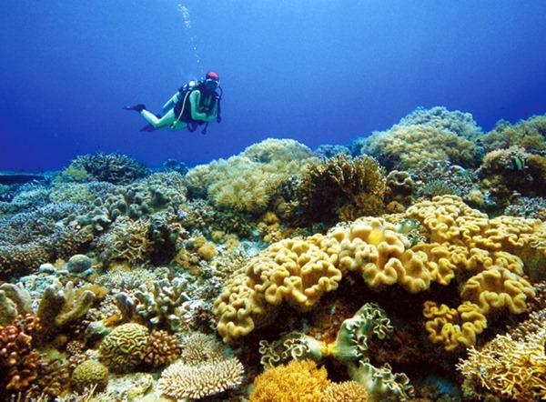 tubbataha-coral-reef