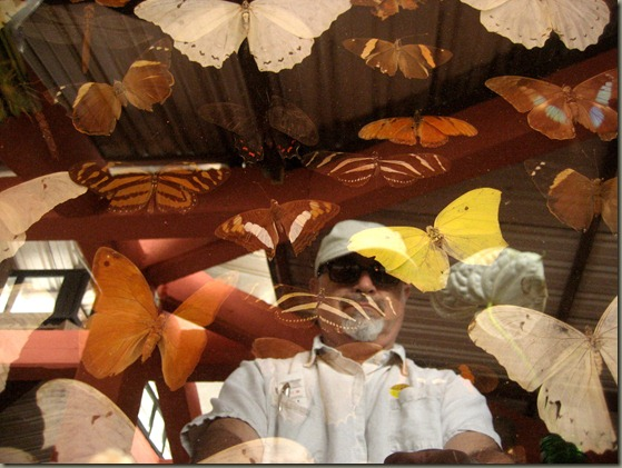 Frowning Man Reflected in Butterfly Display