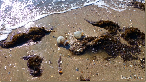 edisto beach_086