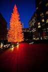 Christmas in San Francisco, 2009-9.jpg