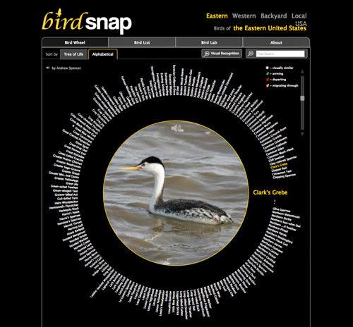 Bird snap
