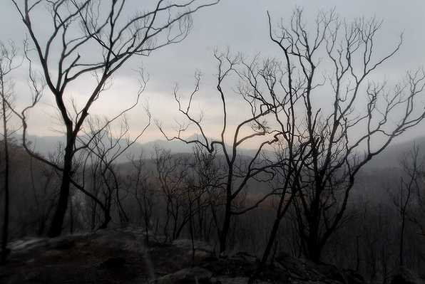 Charred trees in the Warrumbungle National Park, , 19 January 2013. 80 percent of the heritage listed Warrumbungle National Park near Coonabarabran has been destroyed by the most destructive fire in more than a decade. Photo: Jacky Ghossein