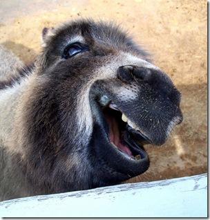 smiling_animal