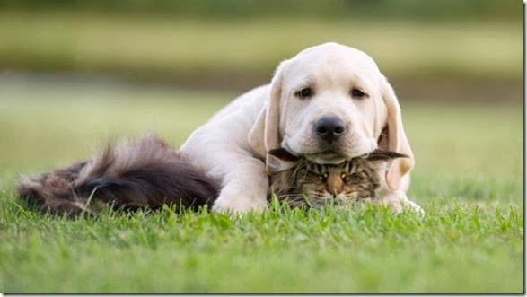 funny-animals-cute-001