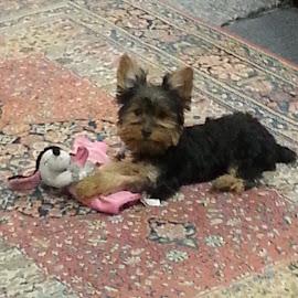 Sophie by Jodi Mara - Animals - Dogs Puppies (  )