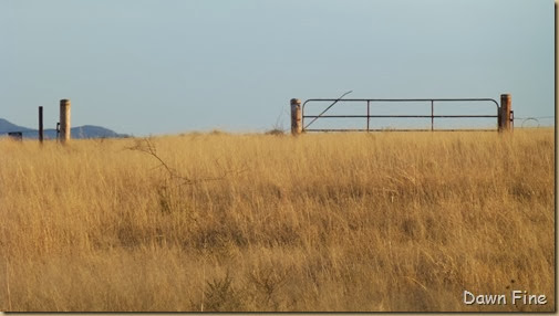 San Rafael Grasslands_024