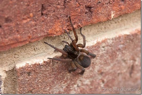 Deathly Spider
