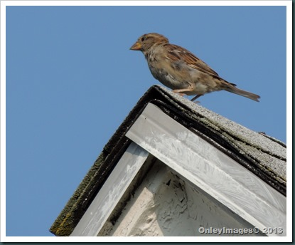 sparrow lookout