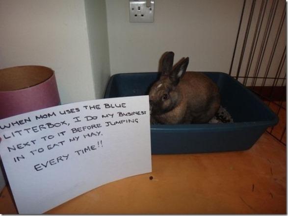 bunny-rabbit-shaming-7
