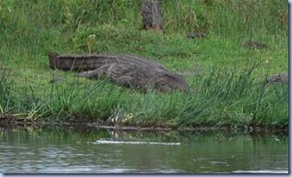 krokodil (800x465)
