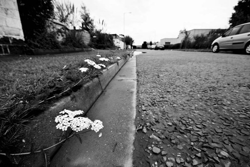 Roadside-Flowers-3