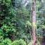 The Lush Rainforest of Mossman Gorge - Oak Beach, Australia