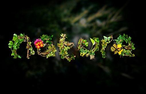 naturemerge