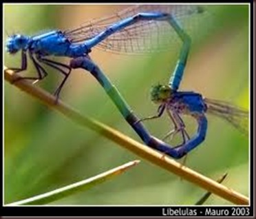 Amazing Pictures of Animals, photo Nature, exotic, funny ,incredibel Zoo, Dragonfly, Insecta, Alex (21)