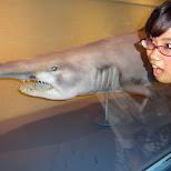 fumie & the shark at the Shinagawa Aquarium in Shinagawa, Tokyo, Japan