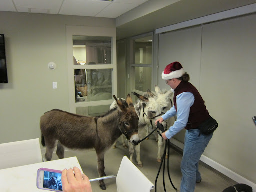 They certainly are getting a lot of attention, but it's not like you see donkeys at TV every day.
