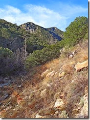 Madera Canyon Hike  Jan 28 019