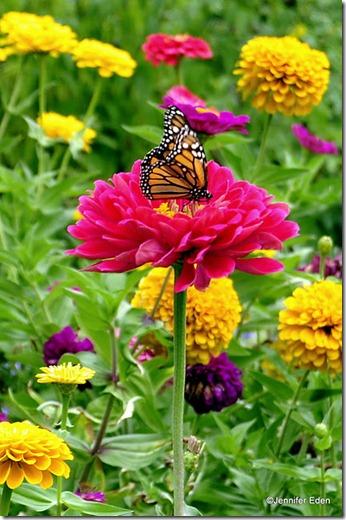borboletas flores paisagem