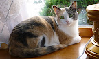 Joy, a calico kitty. Seems Joy here named herself by bringing endless joy to her adoptive family.