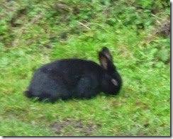 2 towpath bunny