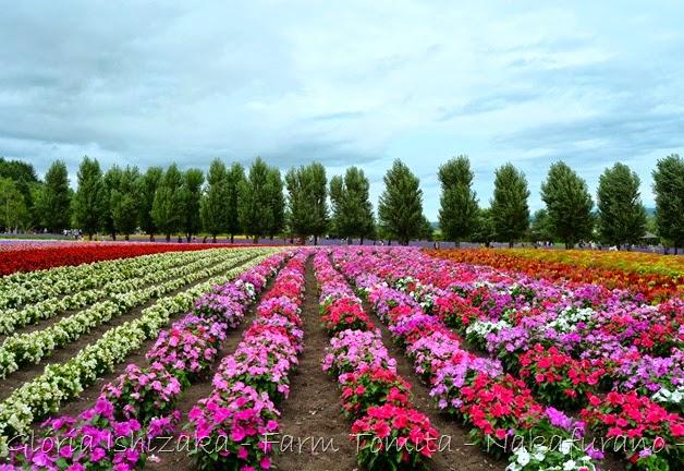 Glória Ishizaka - Farm Tomita 84