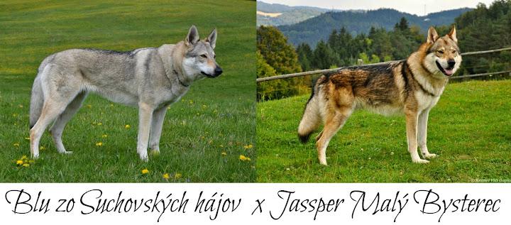 Blu a Jassper
