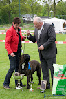 20100513-Bullmastiff-Clubmatch_31200.jpg