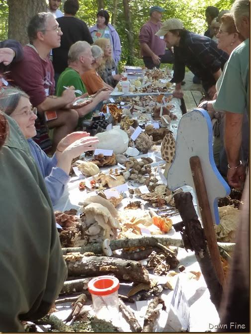 Mushroom festival_086