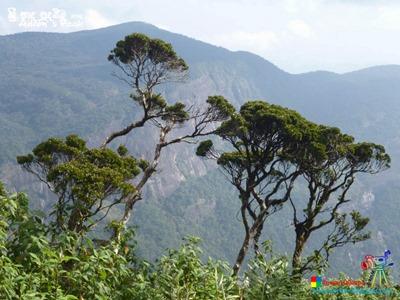 Adam's Peak 2014 by Ruwan Dileepa @ lessonforfree.blogspot (114)