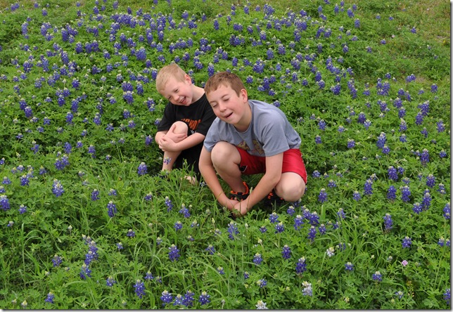 03-14-12 bluebonnets Round Rock 05