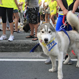 Pet Express Doggie Run 2012 Philippines. Jpg (32).JPG