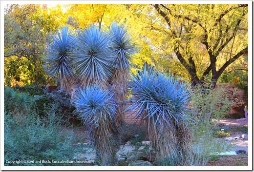 131203_TucsonBotanicalGarden_151