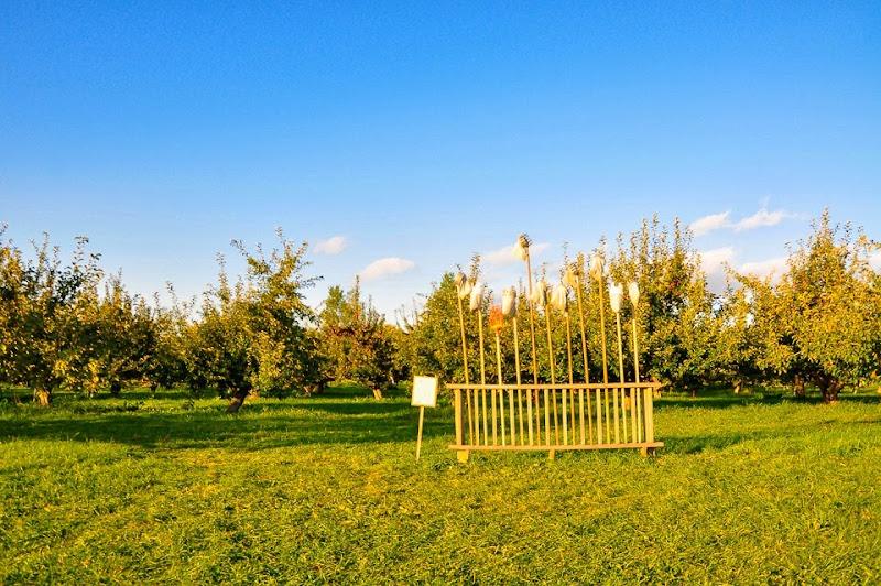 Chapin orchard-8887