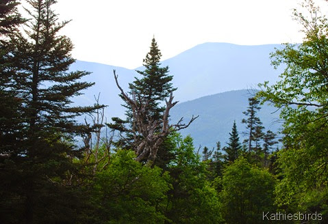 2. in the white mountains-kab