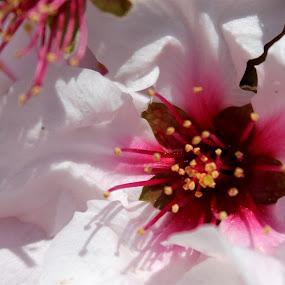 Spring_05.jpg