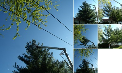 View tree removal