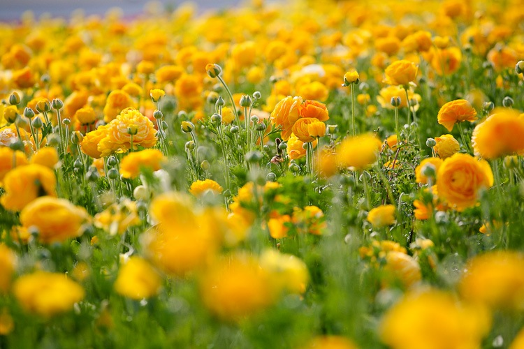 yellow-4