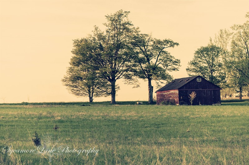 SycamoreLane Photography- farm