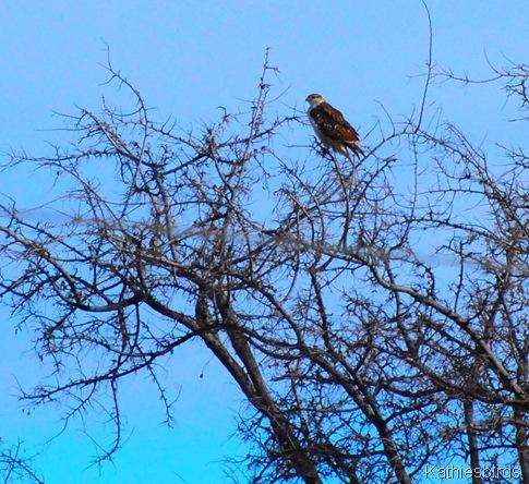 16. feha in tree-kab