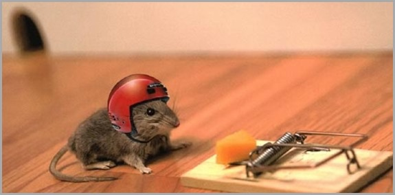 funny_mouse-pics-images-bajiroo-photos