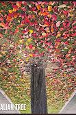 australian-tree-by-zero-dean.jpg