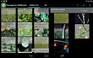 Screenshot of 2350 SW Canada Wildflowers
