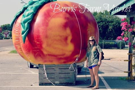 burrisfarmmarket_1