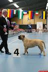 20130511-BMCN-Bullmastiff-Championship-Clubmatch-1682.jpg