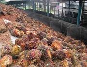 Gambar buah yang di loading ramp