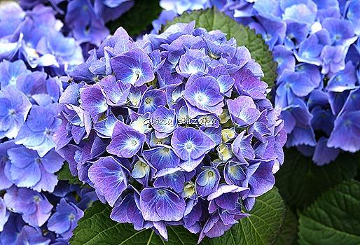 Azul - Glória Ishizaka 56