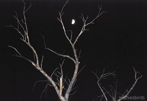 5. Moon-kab