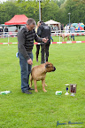 20100513-Bullmastiff-Clubmatch_31016.jpg