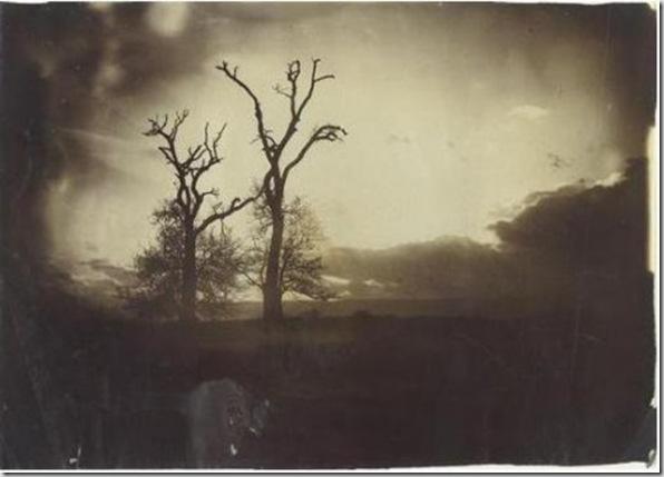 Deux arbres se détachant sur l'horizon au couchant